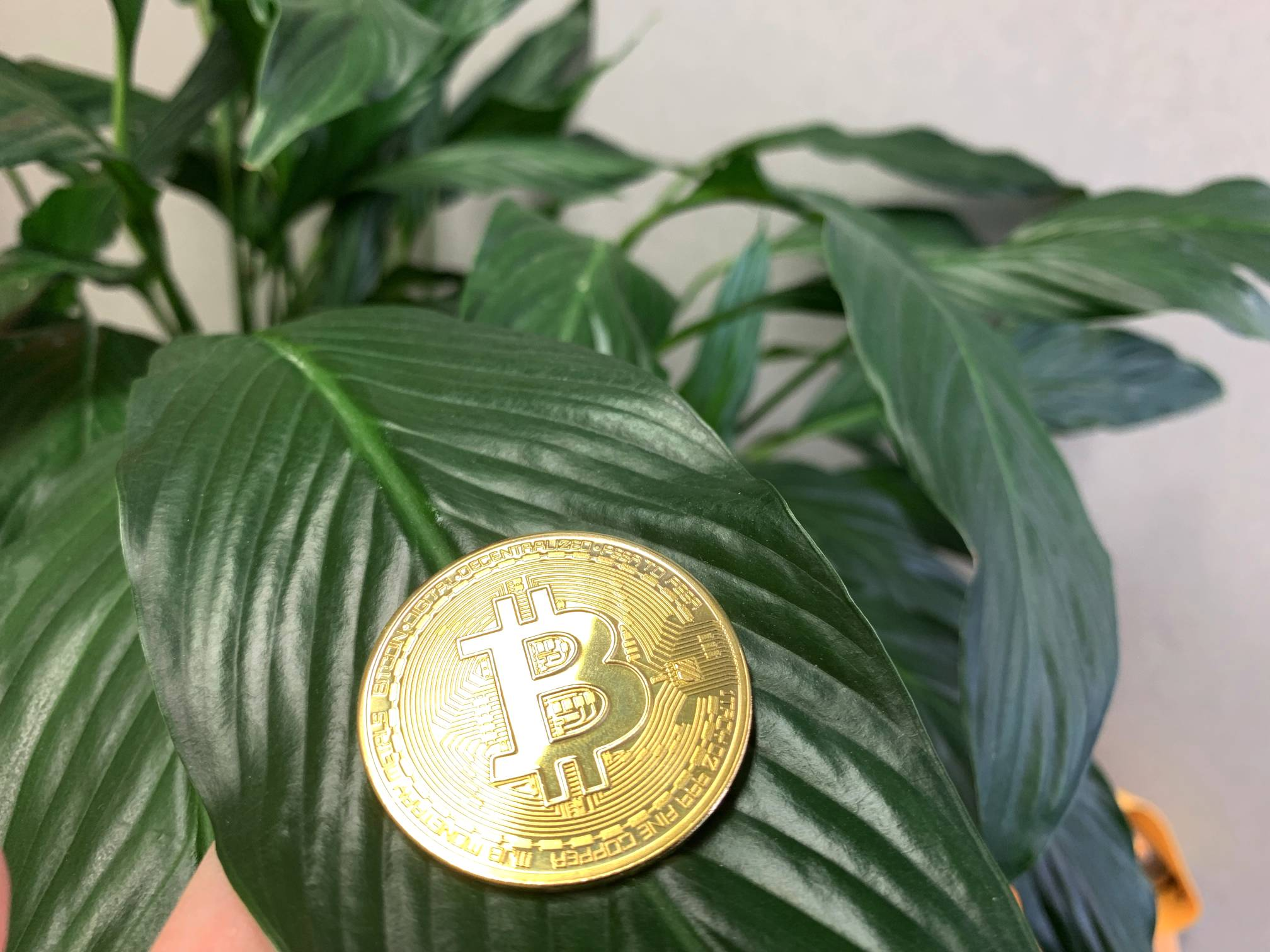 Bitcoin Shining On Green House Plant